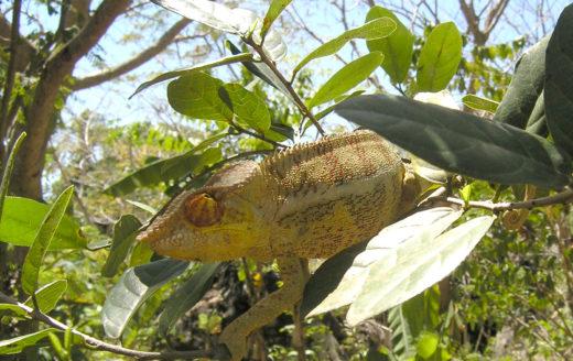 Animal Madagascar