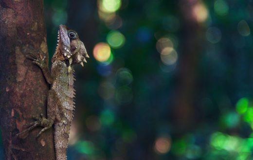 Lizard Madagascar Natura Travel