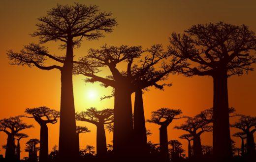 sunset-baobab